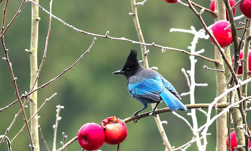 枝に乗っている青い鳥