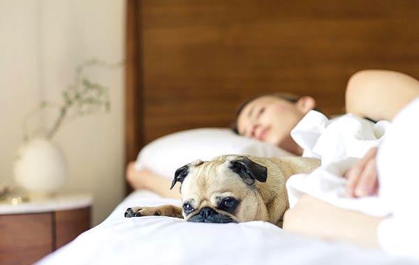 眠い女性 犬