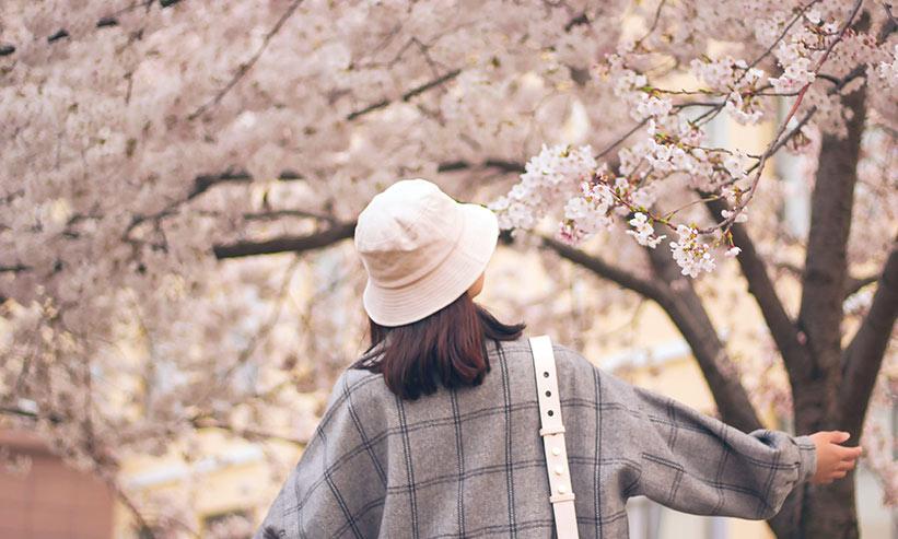 桜の木を触る女性