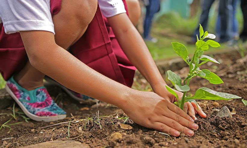 苗を植える子供