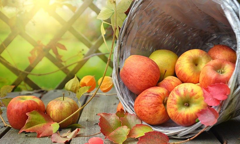 カゴに入ったたくさんのリンゴ